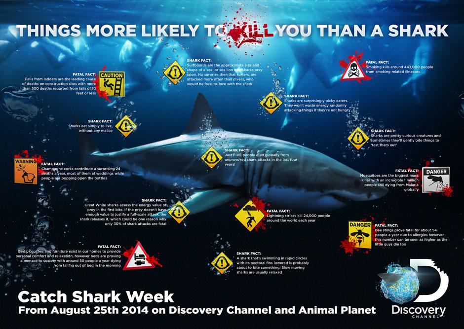 info-shark01