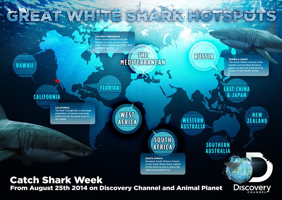 info-shark02